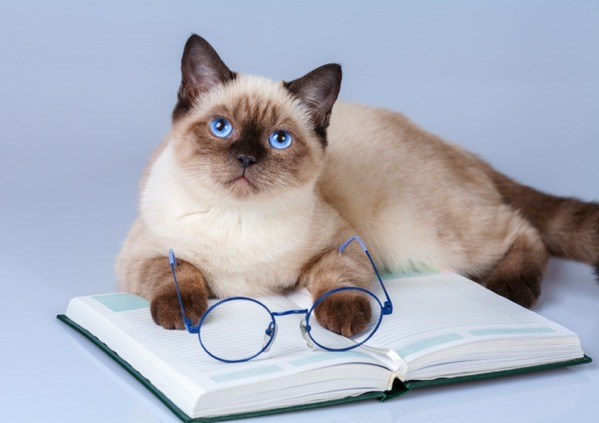 Cute business cat wearing glasses reading notebook book