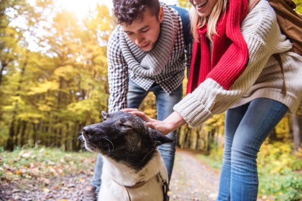 beautiful couple with dog on a walk in colorful autumn forest holding hands B cU5tSGW